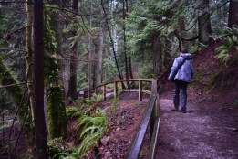 best hikes for kids, bellingham hiking, kids in nature, winter hikes