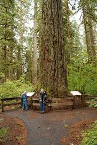 hiking with children, old growth hikes, baker lake,