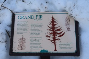 swauk forest discovery trail, snowshoeing swauk forest, winter hiking, blewett pass, winter hikes for kids