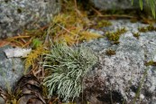 north cascades national park, hikes for kids, newhalem area hiking,