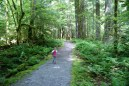 trail of the cedars, north cascades national park, old growth, newhalem area, best hikes for kids