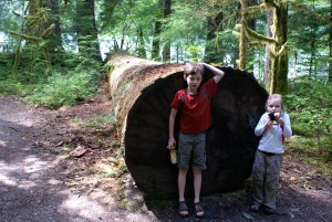 trail of the cedars, north cascades national park, old growth, hikes for kids, newhalem