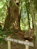 Rockport State Park, old growth hikes, north cascades