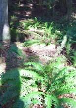 stimpson family nature reserve, washington native plants,