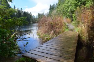 bellingham hikes, squires lake trail, easy kid hikes