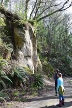 sehome hill arboretu, hikes for kids, bellingham, geology