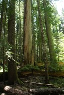 happy creek, north cascades, summer hiking, best hikes for kids