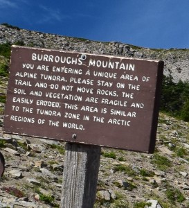 best hikes for kids, burroughs mountain, alpine zone, subalpine, fall hikes, sunrise area
