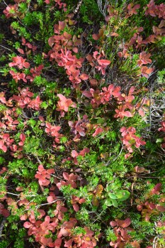 chain lakes trail, mt. baker, best hikes for kids, fall color, hikes for fall