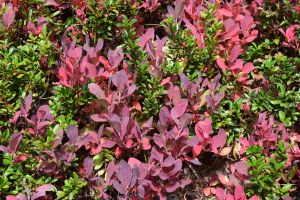 fall colors, north cascades, best hikes for kids, heather maple pass trail,