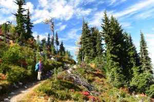 heather maple pass trail, best hikes for kids, north cascades, fall hikes, larches
