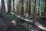 rock trail, bellingham hikes, geology, hikes for kids, larrabee state park