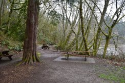 tolmie state park, hikes for kids, olympia, beach, forest, spring