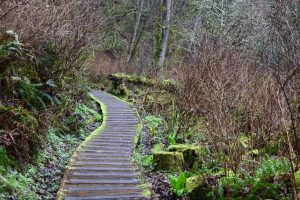 tolmie state park, spring, hikes for kids, rainy day, forest, olympia
