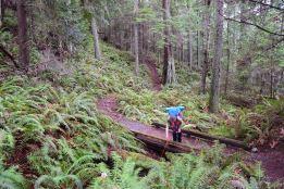 heart lake trail, anacortes, acfl, winter hiking, hikes for kids, washington nature, ferns, green