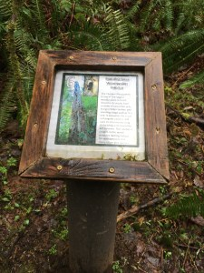 tolmie state park, hiking, hikes for kids, rain, wet, spring, shady,