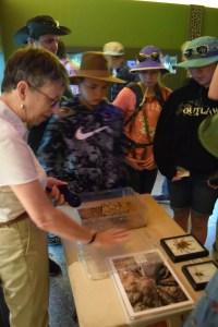 arizona sonora desert museum, arachnid, desert creatures,