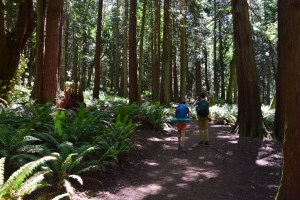 larrabee state park, fragrance lake trail, hikes with kids, summer hiking