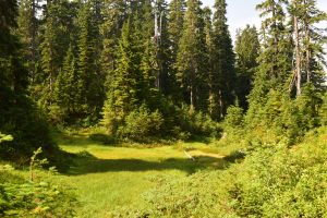 blue lake trail, mt baker, hiking with kids, best hikes for kids, summer