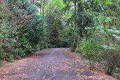 Schmitz Preserve Park, best hikes for kids, seattle, hikes, nature play, kids in parks,