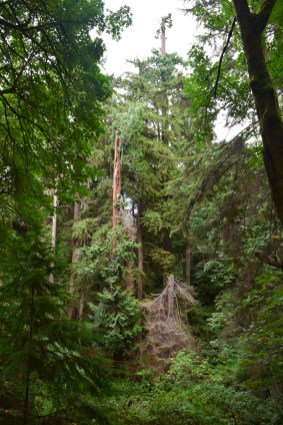 schmitz preserve park, best hikes for kids, old growth, nature, seattle