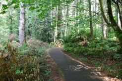 redmond watershed preserve, hikes for kids, forest