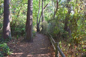 lincoln park, west seattle, hikes for kids, nature, fall, hiking