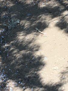 central oregon, eclipse 2017, summer, eclipse shadows