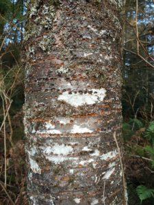 hazel wolf wetlands, king county parks, nature, birds, woodpecker, winter