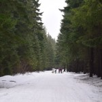 snowshoeing, winter hikes for kids, snowshoeing with dogs, winter, snoqualmie pass, washington hiking