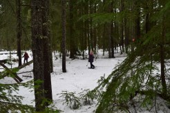 kachess dam road, snowshoe with kids, winter hikes for children, I-90 hiking, snoqualmie pass