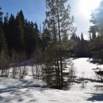 blewett pass snowshoe, pipe creek sno-park, winter hikes for kids, families on the trail