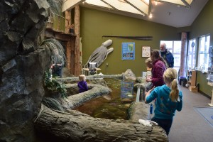 SEA Discovery Center, Poulsbo, free aquarium, free kids activities, washington sea life