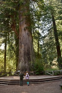 california redwoods, highway 101, newton be drury scenic parkway, giant redwoods