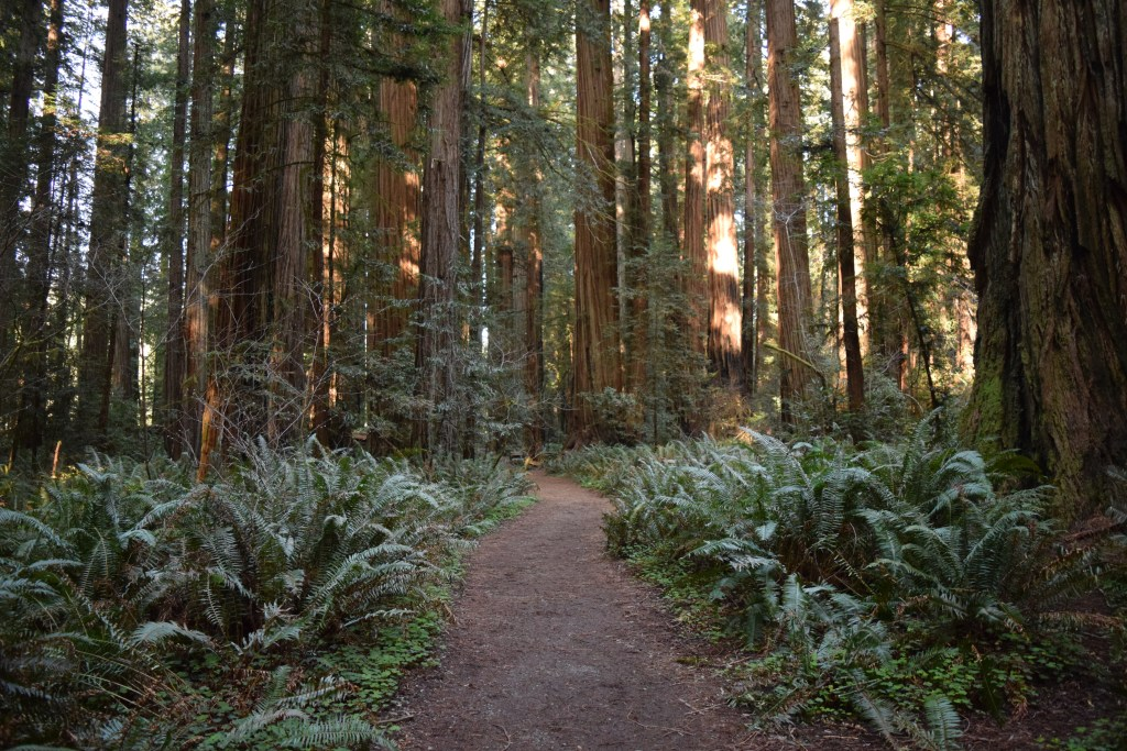california redwoods, hikes for kids, spring break