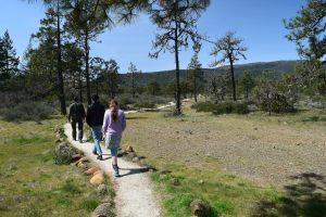 hikes for kids, wildflowers, california, cave junction