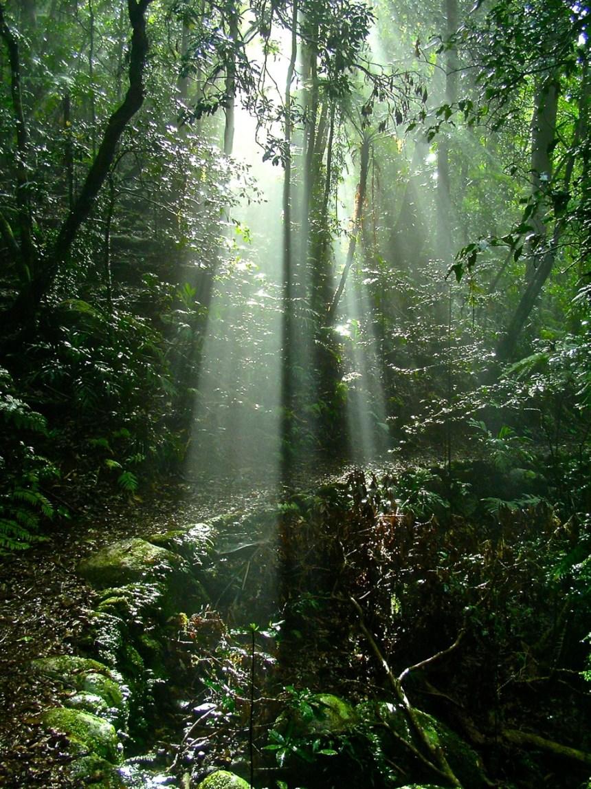 Rays of Light 2