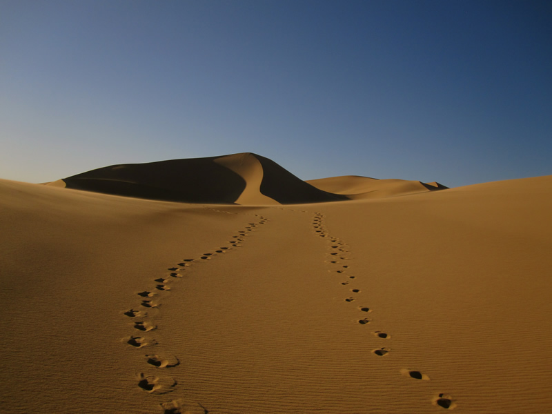 Gobi Desert, Mongolia, 2009