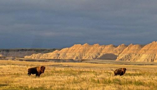 bonnie-tyler-and-buffalos