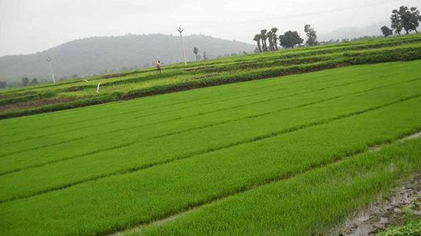 Govt sets record 104.3 million tonne rice production target for 2021-22 kharif season