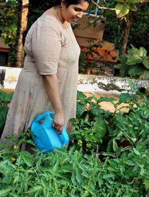 novel venture a rooftop garden at lakshmi menon s house at peramangalam near thrissur