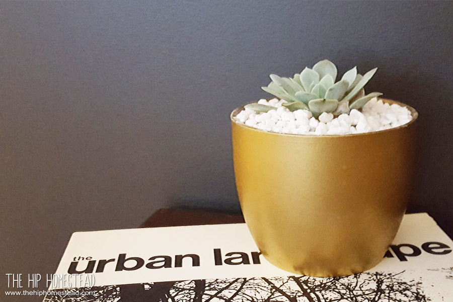 How to pot up succulents The Hip Homestead