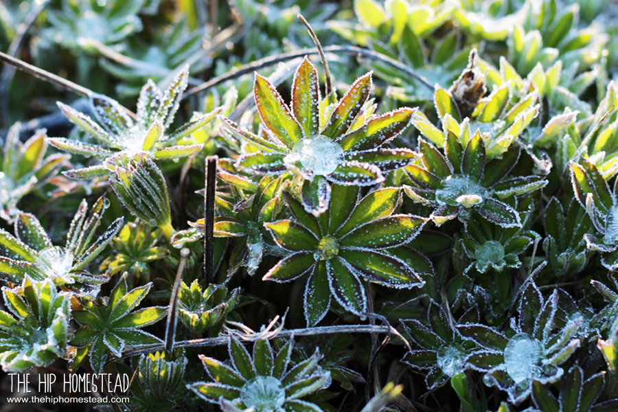 Cold Season Gardening How to Get Growing Now The Hip Homestead