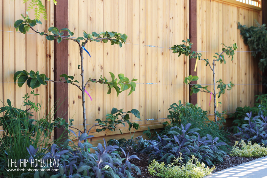 How to Create an Amazing Homestead Garden - The Hip Homestead