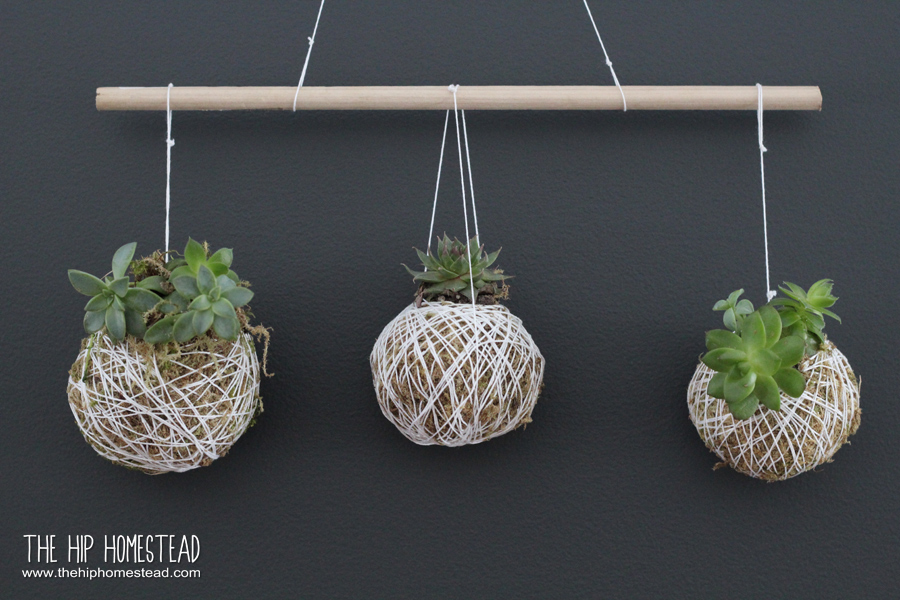 Groovy How To Make A Hanging Succulent Garden The Hip Homestead Home Remodeling Inspirations Basidirectenergyitoicom