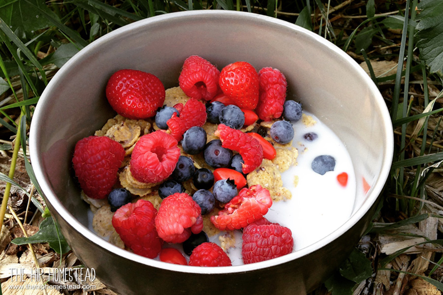How to Grow Harvest Use Strawberry Plants and Berries - The Hip Homestead