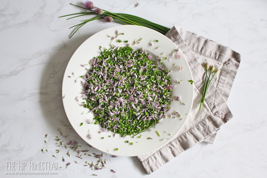 How to Grow Chives - The Hip Homestead