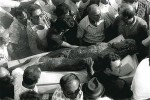 Crowds flock to the bronze as it's recovered from the sea, 1972