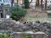 Cats at Largo di Torre Argentina