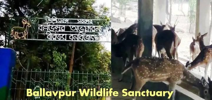 Ballavpur Wildlife Sanctuary | Deer Park Bolpur West Bengal